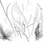 Nature study - 1964-65 - 47.5x32.5cm - tint drawing