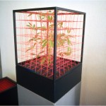Nature-Space-Form I. - 1979-82 - 50x40x40cm - lives plant, painted wood, rubber, aluminum
