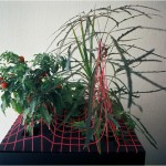 Nature-Space-Form I. - 1979-82 - 40x40x40cm - lives plant, painted wood, rubber